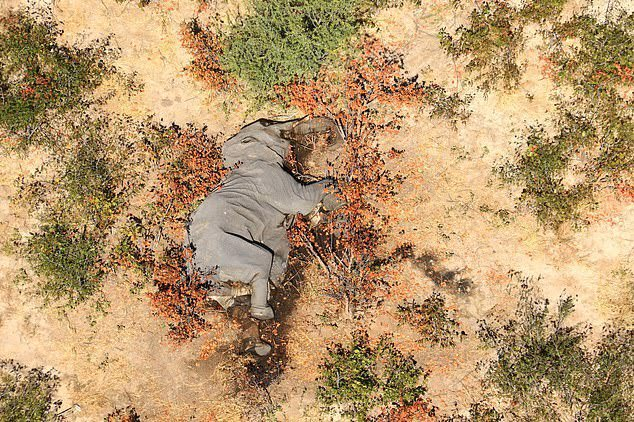 ПОМОР ВО БОЦВАНА: За еден месец угинаа повеќе од 350 слонови