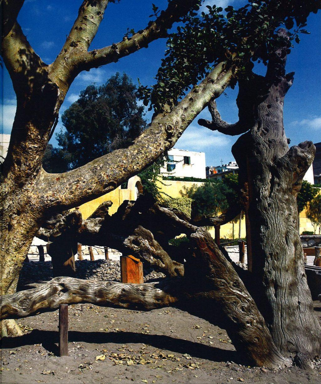 Дрвото во Матарија во кое Марија се сокрила со Исус по бегството во Египет