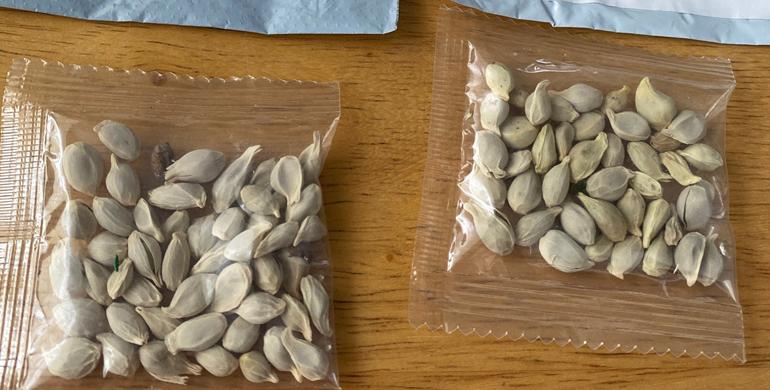 ПОЛСКА: Пакетите со кинески семиња можат да се сметаат за биотероризам