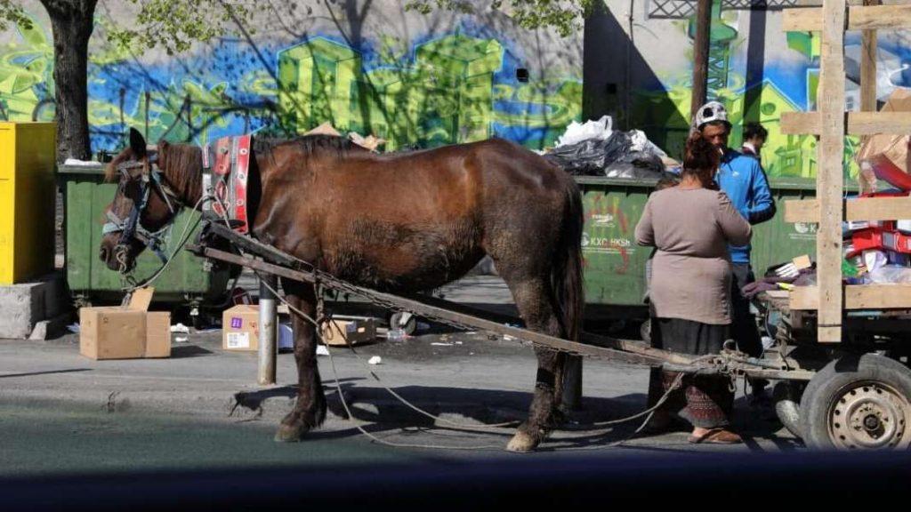 АХВ: Од денеска кампања за подигање на свеста на луѓето за подобар живот на коњите во Македонија