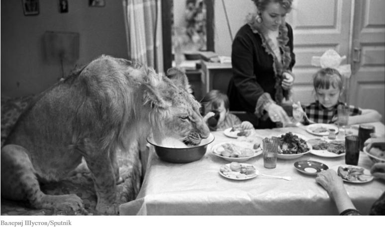 ФОТО: Како заврши приказната на едно семејство кое во станот чуваше лавови?
