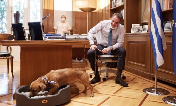 Peanut – новиот пријател на Мицотакис, премиерската палата во Атина посвои бездомно куче